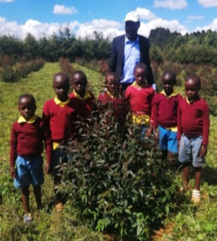 Pupils of Siwot Primary with their teacher with three month old clonal gums