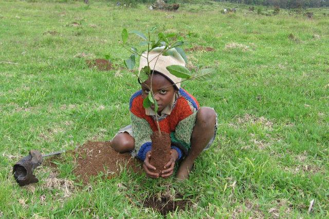 Child planting tree
